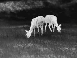 Termovizní předsádka Leica Calonox